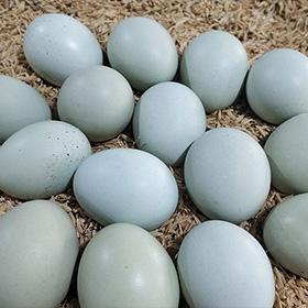 来自泰州家禽养殖的美食诱惑---农村散养土鸡蛋