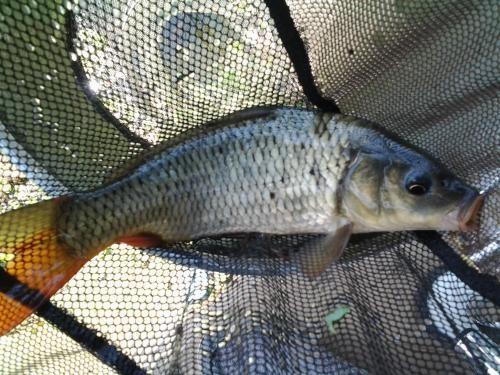 鱼塘钓鱼遇淤泥和酱层如何应对?