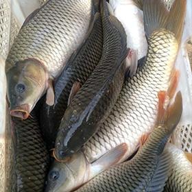 春天在浅塘钓鱼有什么注意事项?
