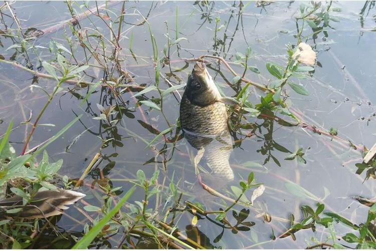 如何在养殖鱼塘垂钓