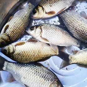 鱼塘钓鱼饵料配方