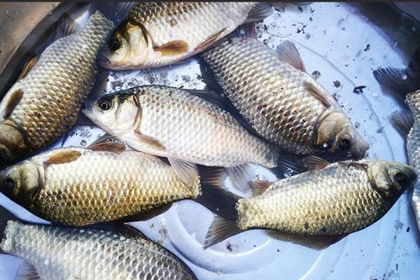 【钓鱼技巧】池塘中垂钓,四个方法教你如何选位