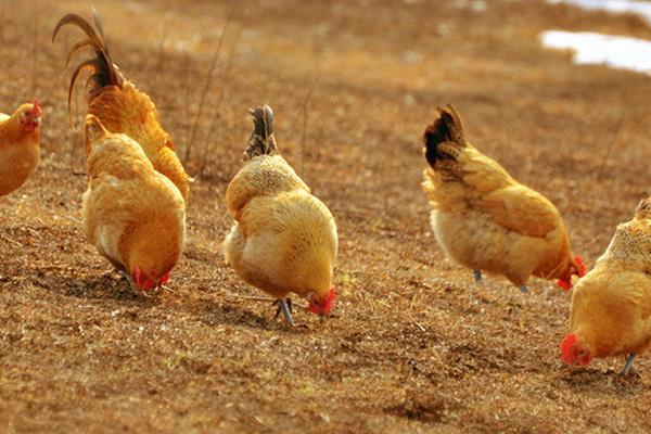 苏陈出售土鸡蛋多少钱