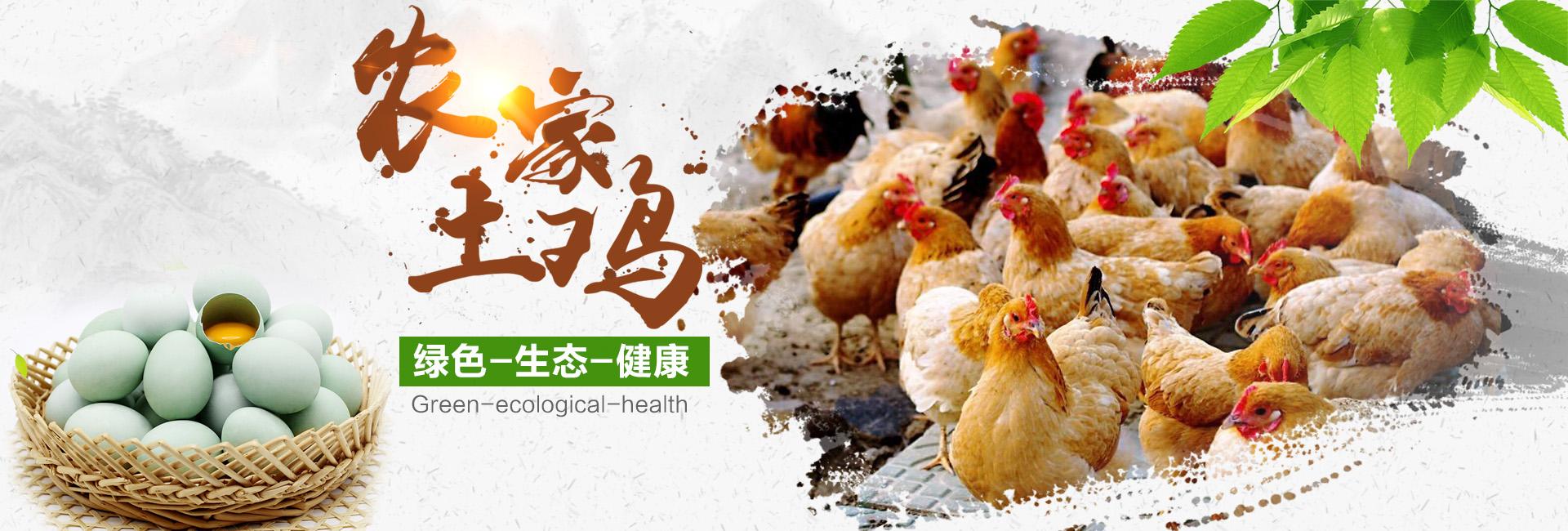 泰州家禽养殖